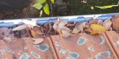 gutter-cleaning-cremorne